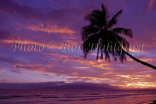 Silhouette of palm tree at sunset with Island of Lanai in distance. Maui, Hawaii Picture