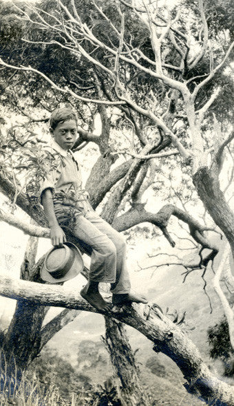 Hawaiian Boy In A Koa Tree - Historic