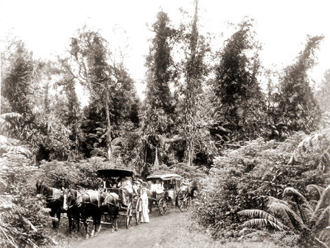 1900s Picture Of Visitors On Volcano Road