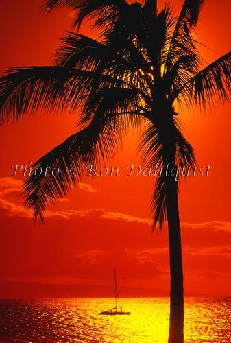 Silhouette of palm tree and sailboat at sunset, Kaanapali, Maui, Hawaii