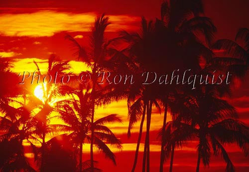 Silhouette of palm trees at sunset. Maui, Hawaii