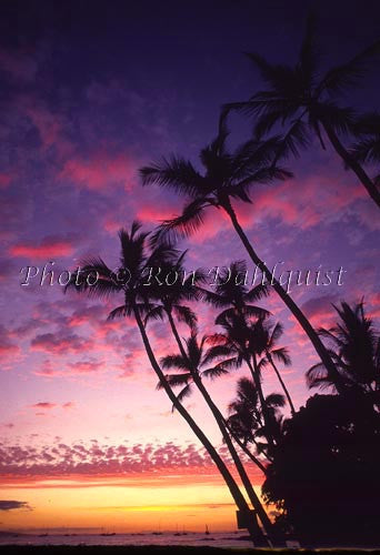 Palm trees at sunset, Lahaina, Maui, Hawaii - Hawaiipictures.com