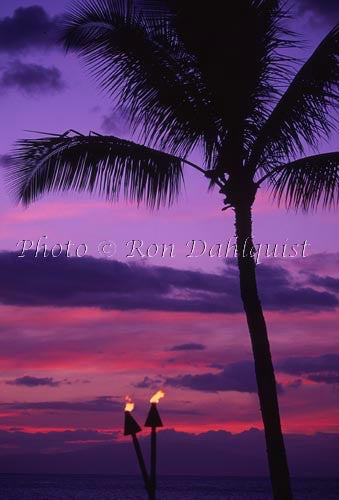 Silhouette of palm tree at sunset. Maui, Hawaii Photo