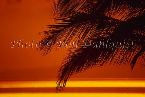 Silhouette of palm frond at sunset, Maui, Hawaii Photo