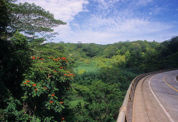 Tropical Rainforest And Road