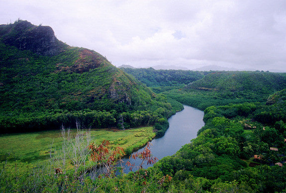 Kauai River Picture