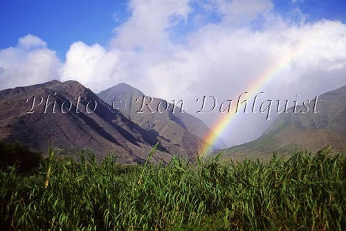 Rainbow over West Maui Mountains, sugar cane in foreground, Maui, Hawaii