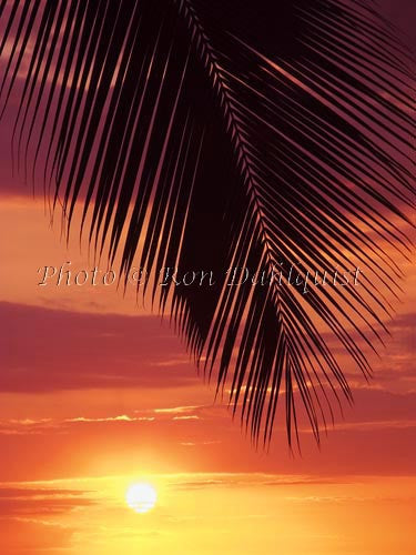Silhouette of palm frond at sunset, Maui, Hawaii Picture
