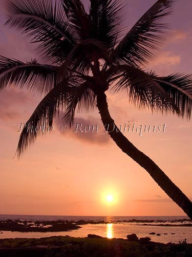 Silhouette of palm tree at sunset. Maui, Hawaii