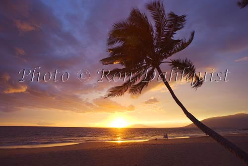 Sunset in Kihei with palm tree silhouette, Maui, Hawaii