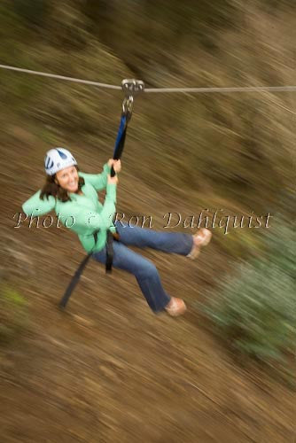 Zipline at Skyline Eco-Adventures, Upcountry Maui, Hawaii Picture