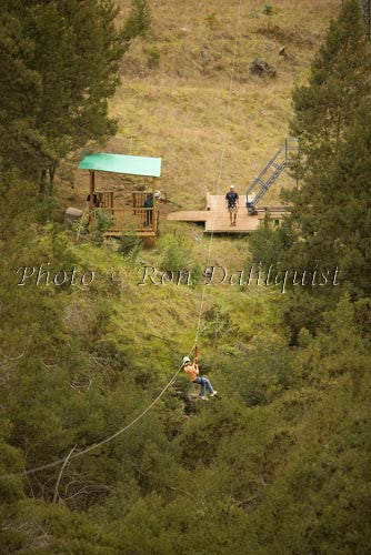 Zipline at Skyline Eco-Adventures, Upcountry Maui, Hawaii Picture Photo - Hawaiipictures.com