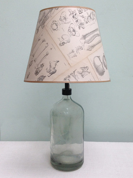 "12"" lampshade of Antique Anatomical Prints"