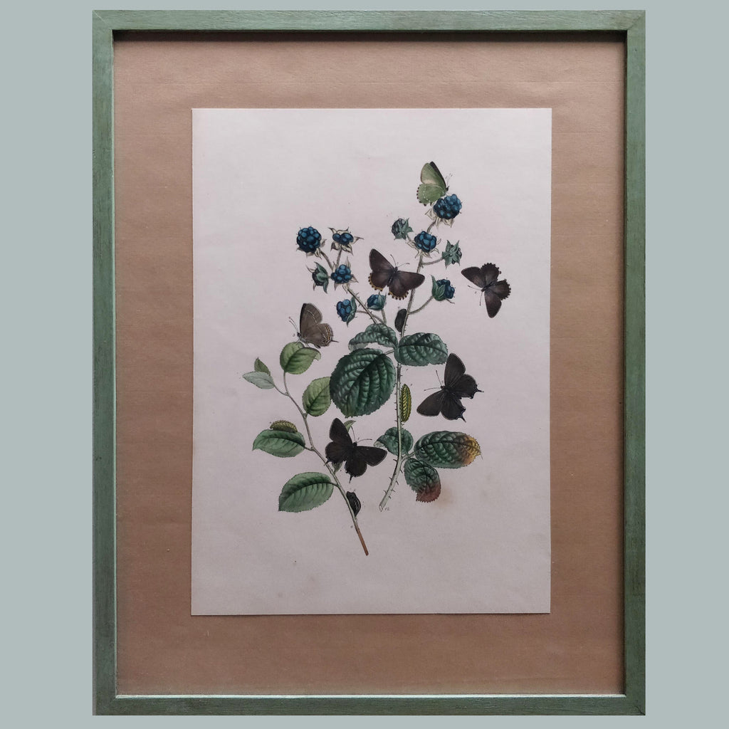 A late 19th Century butterfly print
