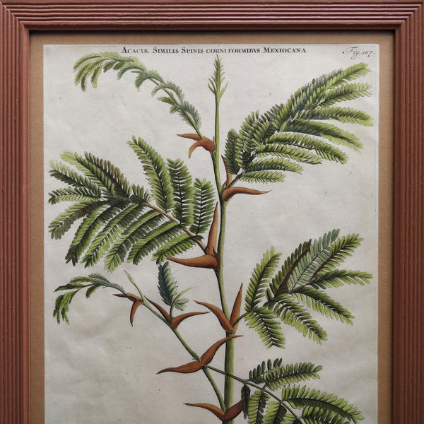 18th Century Tropical tree print