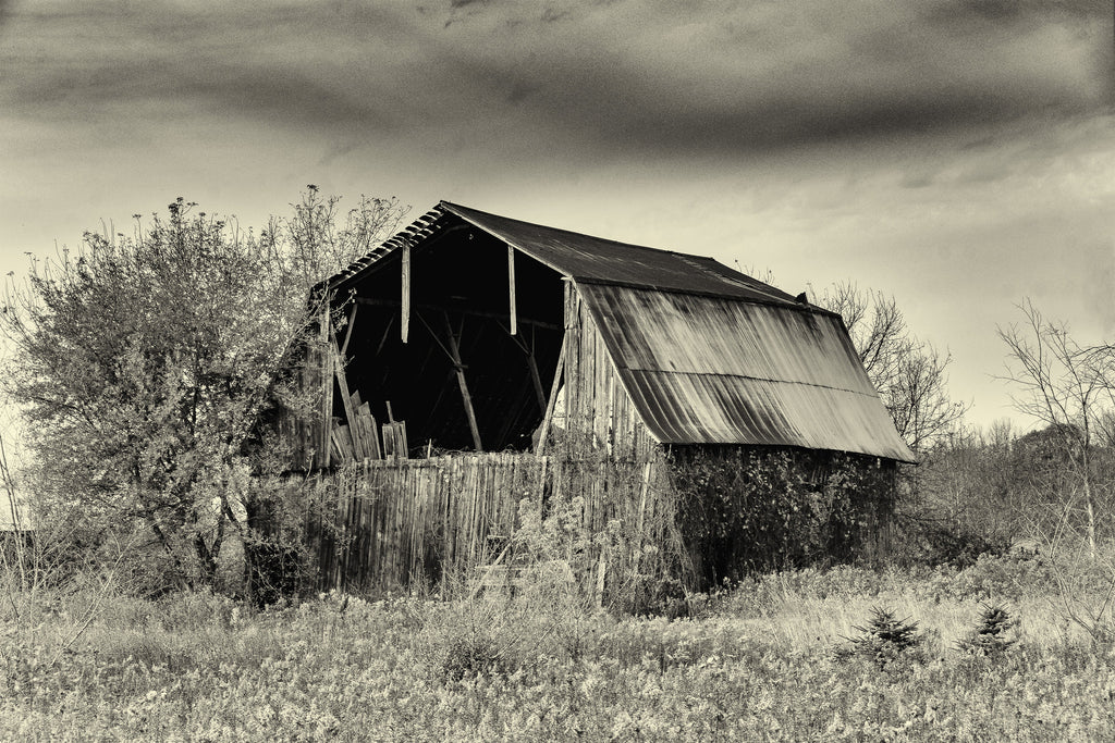 Michigan Barn 1 B&W