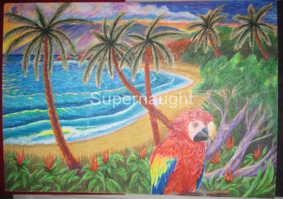 Keith Jesperson Tropical Island Parrott Drawing Signed