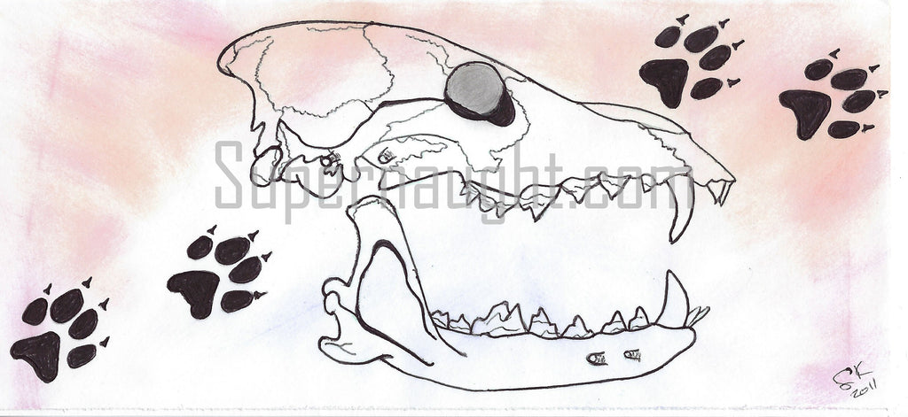 Scott Lee Kimball skull drawing signed