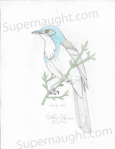 Arthur Shawcross Signed Prison Drawing Blue Jay Serial Killer Artwork