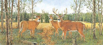 Brewster John Ward licensed Deer Wallpaper Border -418B80977