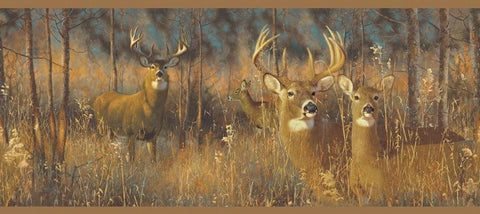 York Lake Forest Lodge - White Tail Deer Wallpaper Border - WG0346BD