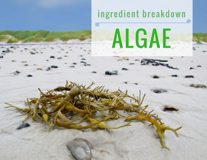 ingredient breakdown algae
