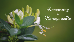 ingredient battle rosemary honeysuckle