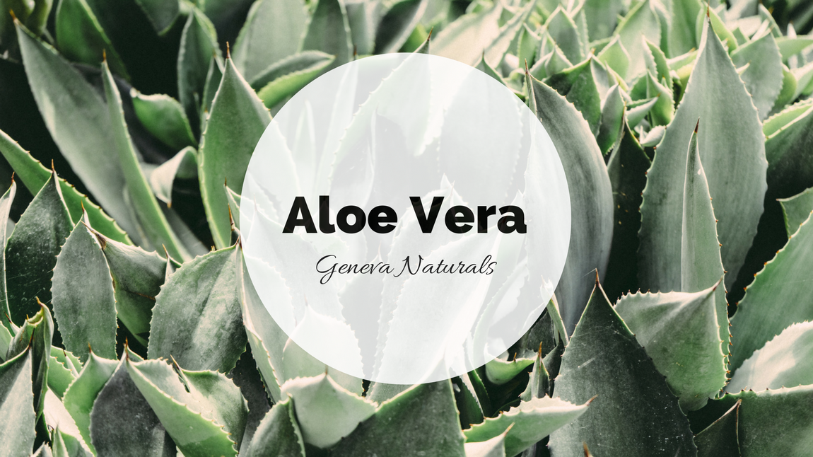 aloe vera skin care ingredient