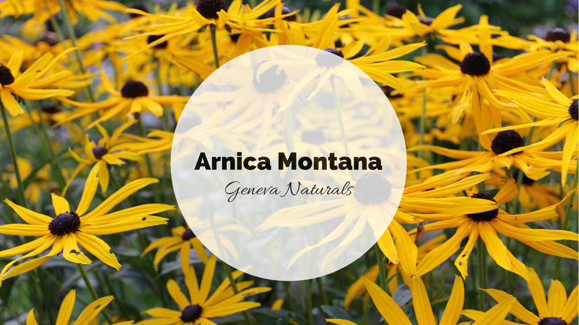 arnica montana skin care ingredient