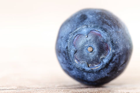 closeup of blueberry