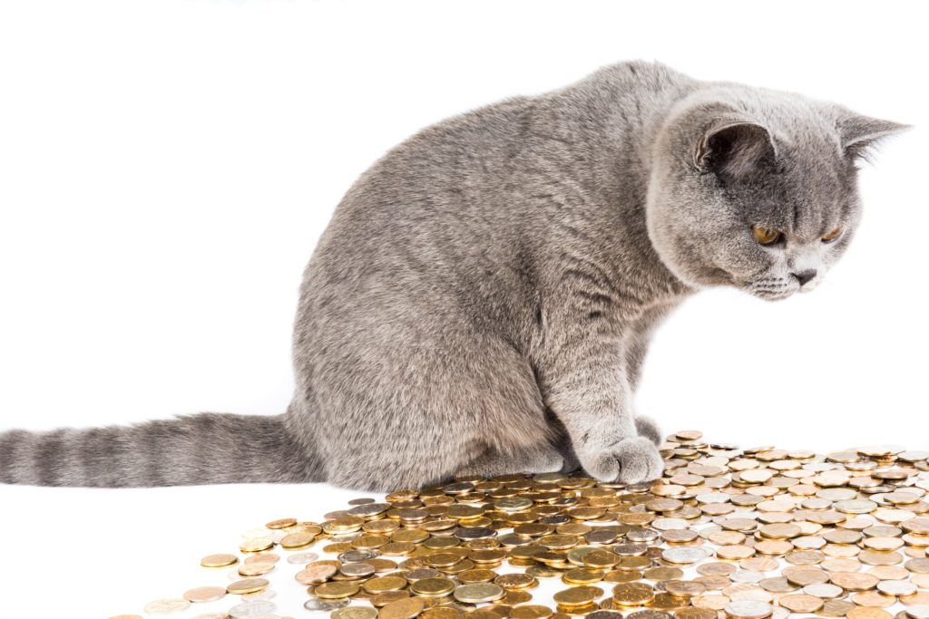 cat standing on coins