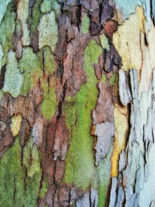 layers of tree trunk