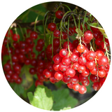 cranberry extract for skin
