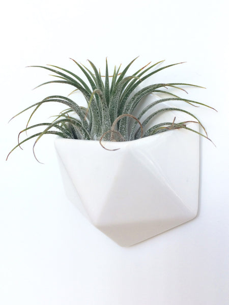 Mini Magnet Planter - Clarke Collective - 1