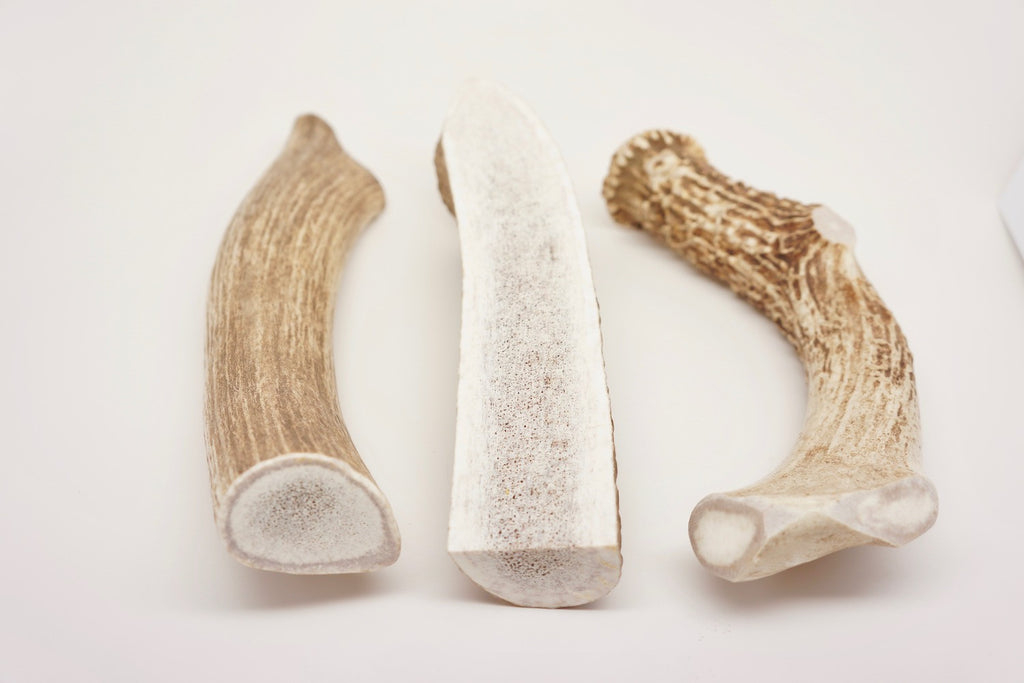 Not sure which antler chew is best for your dog...this post will help explain the differences.