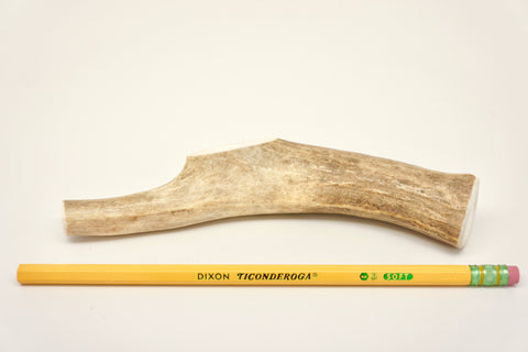 Small Deer Antler