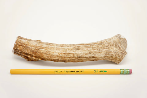 Large Deer Antler