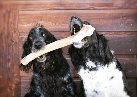 RidgeRunner The BEAST Elk Antler Dog Chew Bones - for Very Large Dogs