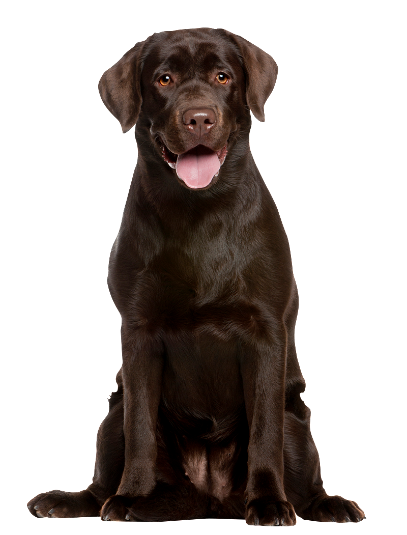 online Earnings Management: Emerging