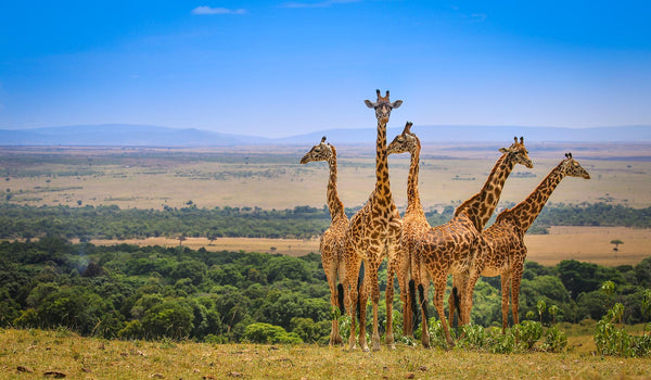 Have Bikini. Will Travel: The Ultimate Guide to the Maasai Mara