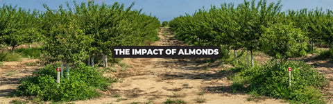 Almond Milk Is Unhealthy and It's Ravishing the Environment