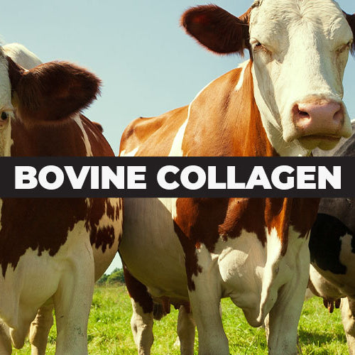 Bovine Collagen: Increase Muscle, Bone and Immune Health