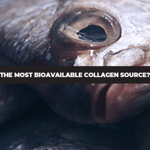 Fish Collagen: The Most Bioavailable Collagen Source Yet?