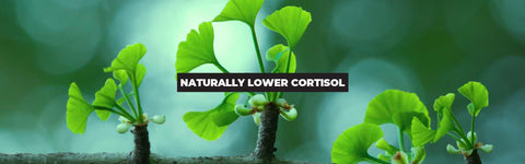 5 Best Supplements To Reduce Cortisol: Lower Stress Levels Naturally