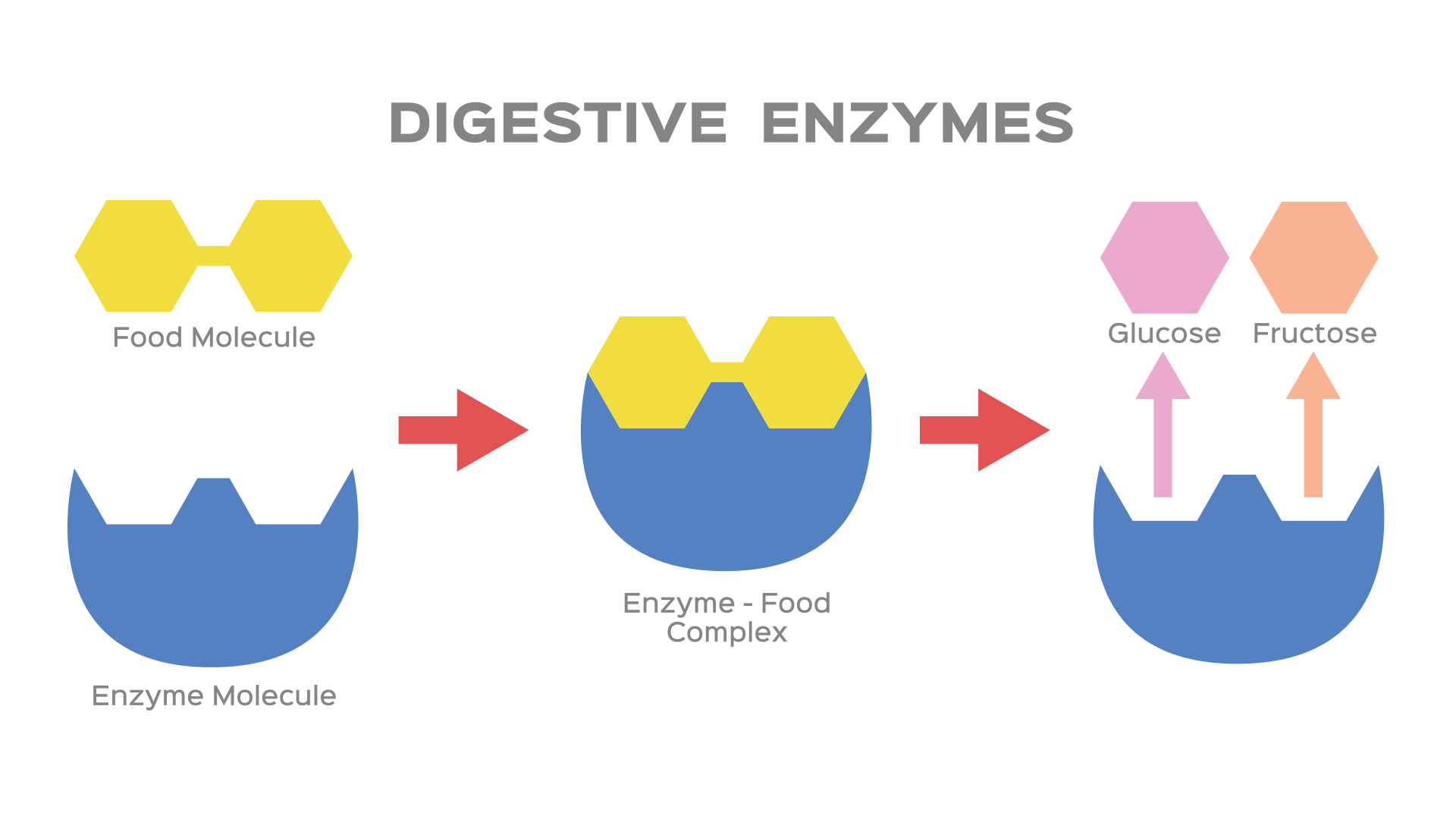 How Enzymes Help