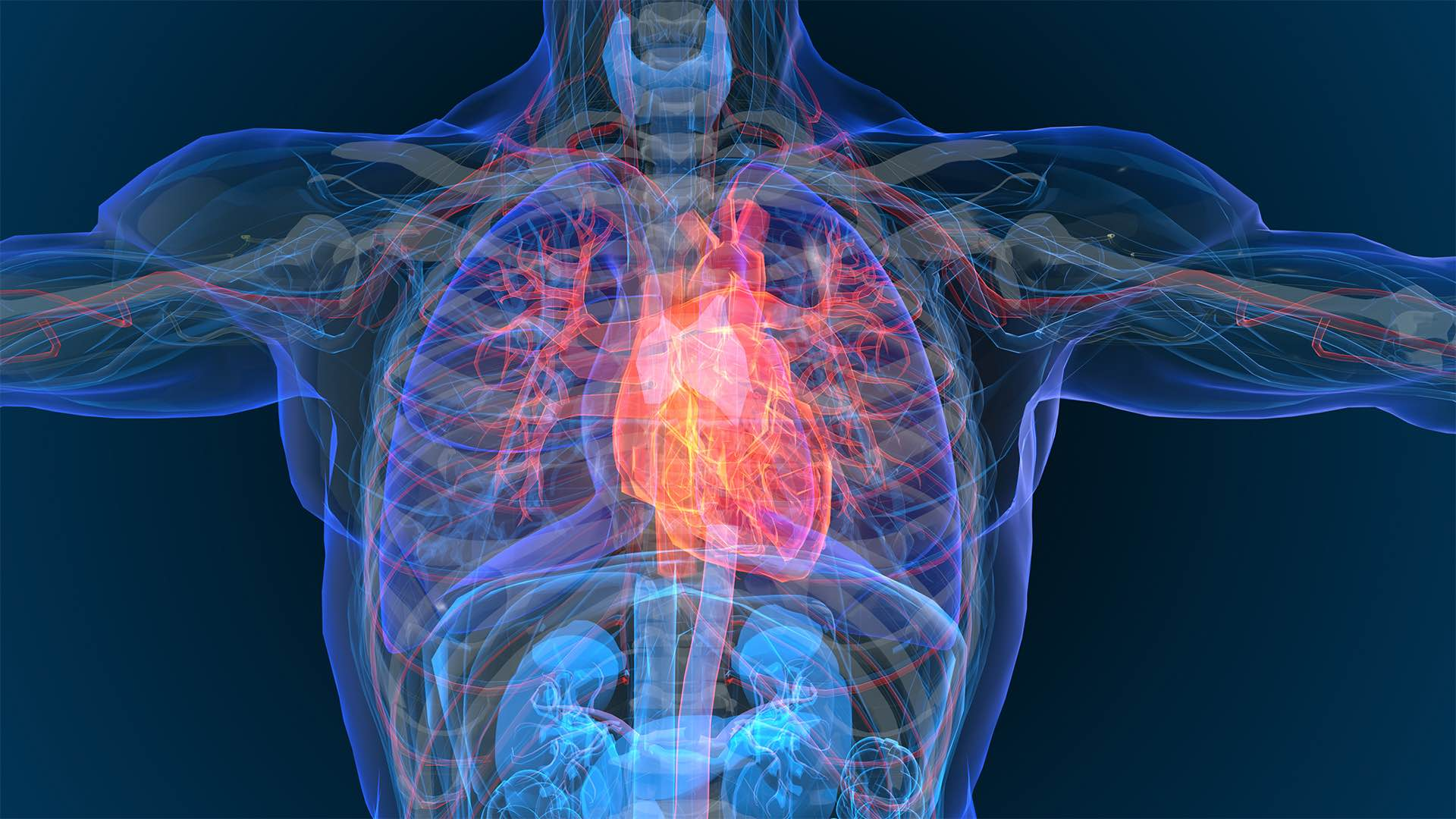 heart disease and cortisol
