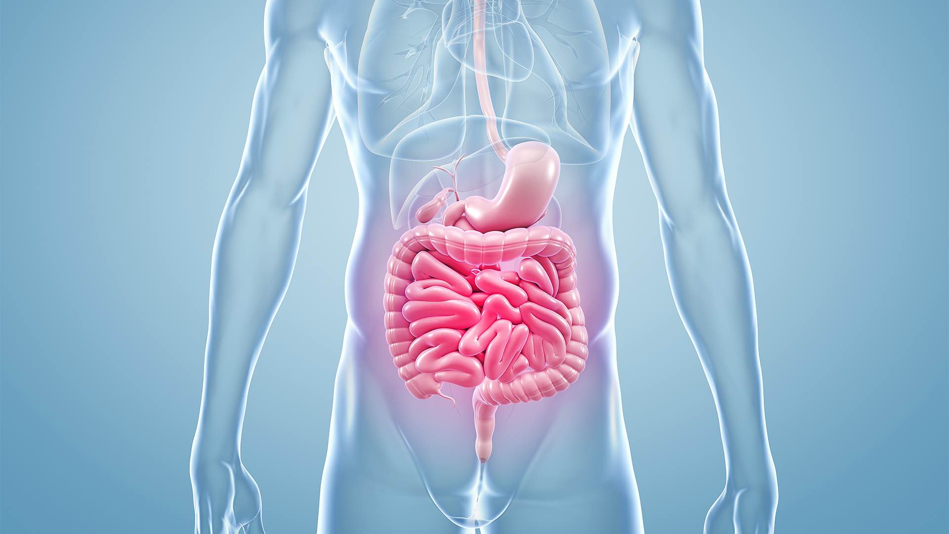 iron and gut health