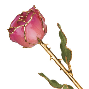 Gold Trim Pink Picasso Rose from Miles Beamon Jewelry - Miles Beamon Jewelry