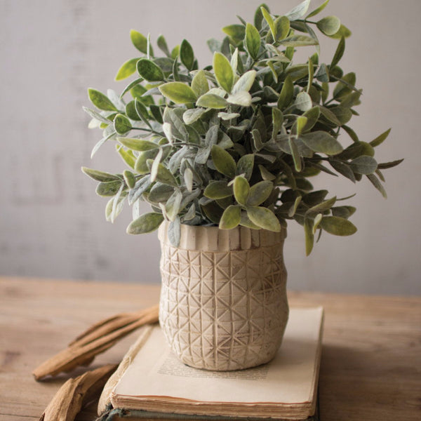 The Cody Sage Bush in Criss Cross Pot