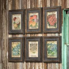 Flower Seed Pack Framed Prints